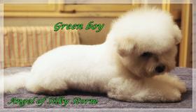 Foto 3 Bichon frise puppies