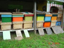 Bienenvolk Bienen Ableger zu Verkaufen