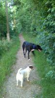 Foto 5 Biete Hundebetreuung / Training