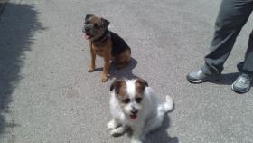 Foto 6 Biete Hundebetreuung / Training
