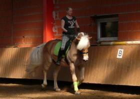 Biete Reitbeteiligung an 7 jährigem Haflinger