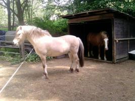Biete Weideplatz für 1-2 Pferde ab sofort!