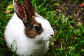 Biete liebevolles Tiersitting an