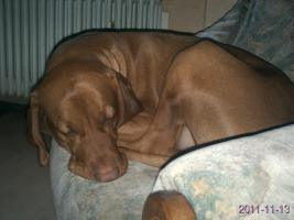 Foto 2 Biete tollen Hundejungen...