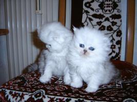 Bildh�bsche Kitten!!!
