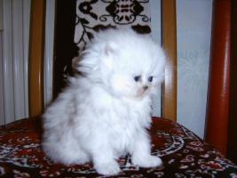 Foto 3 Bildh�bsche Kitten!!!