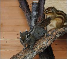 Bildschöne Hörnchenarten zum verlieben