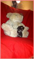 Foto 18 Bildschöne Sibirische Waldkatzen Babys