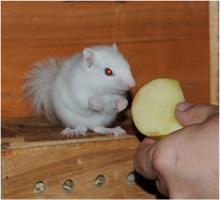 Foto 4 Bildschöne Streifenhörnchen zum verlieben