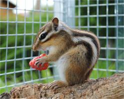 Bildschöne zahme Hörnchen zum verlieben