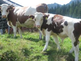 Foto 12 Billige-komfortable-Ferienwohnungen-in Oesterreich-Land-Salzburg_Uttendorf