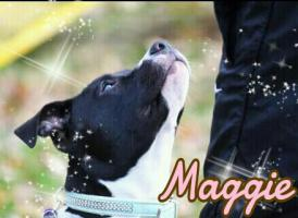 Foto 2 Black Magic Maggie sucht Artgerechtes Heim