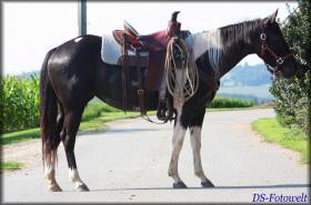 Foto 4 Black Tobiano Paint Horse Stute