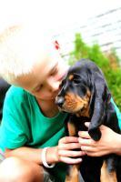 Foto 2 Black and Tan Coonhound Welpen mit Stammbaum