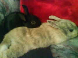 Foto 2 Blacky und Jacky suchen neues zuhause