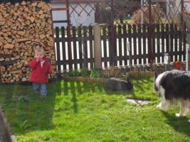 Foto 2 Blaue Wiener, Stallhase, Schlachthase