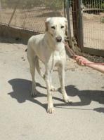 Blondie, ein Angsthund sucht erfahrende Hände