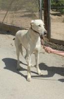 Foto 2 Blondie, ein Angsthund sucht erfahrende Hände