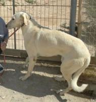Foto 3 Blondie, ein Angsthund sucht erfahrende Hände