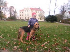 Bloodhoundwelpen