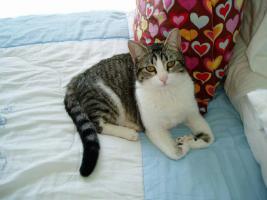 Bluffy, Katze, 2,5 Jahre jung, eine Liebe die zu Ende ging