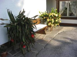 Blumen-Kakteen