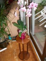 Foto 2 Blumenpodest/ Blumenst�nder/ Blumens�ule, gebeizt