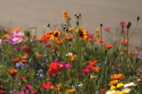 Blumensamen abzugeben