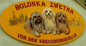 Foto 4 Bolonka Zwetna Welpen - russische Schoßhündchen