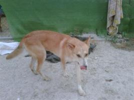 Foto 2 Bono - warum will mich keiner? (Tierschutzhund)