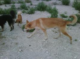 Foto 8 Bono - warum will mich keiner? (Tierschutzhund)