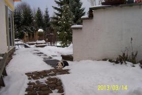 Foto 2 Border Collie Welpe