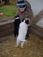 Foto 4 Border-Collie Welpen