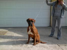 Foto 2 Boxer!!!