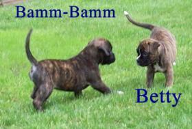 Foto 3 Boxerwelpe (Rüde) für Liebhaber dieser Rasse