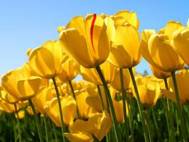 Brachland/Gartenland-auch unbepflanzt- von Hobbygärtnerin gesucht !
