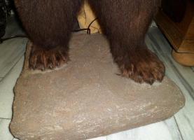 Foto 7 Braunb�r braunb�renpr�parat tierpr�parat auf sockel.inkl. zertifikat