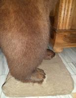 Foto 8 Braunb�r braunb�renpr�parat tierpr�parat auf sockel.inkl. zertifikat