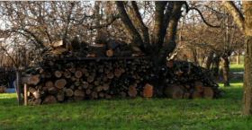 Brennholz Kirschbaum
