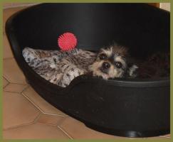 Foto 4 Brillantina weiblich 5 Jahre 32 cm 6 kg Terrier-Mix kastriert gechipt