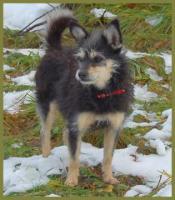Foto 5 Brillantina weiblich 5 Jahre 32 cm 6 kg Terrier-Mix kastriert gechipt