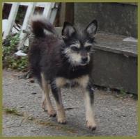 Foto 7 Brillantina weiblich 5 Jahre 32 cm 6 kg Terrier-Mix kastriert gechipt