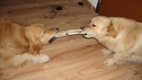 Foto 4 Bruno, ein Mischlingshund, sucht dringend eine Familie!