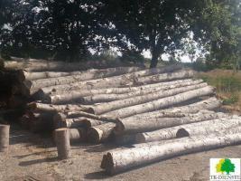 Buchenstammholz- Industrieholz zur Brennholzaufbereitung