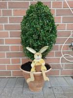 Buchsbaum im Terratopf mit Hase ;-)