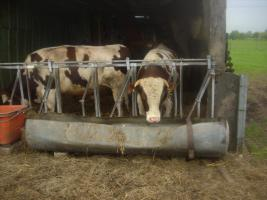 Bulle mit Biostatus!ca.350 kg ausgeschlachtet !