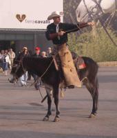 Busfahrt zur Pferdemesse fieracavalli nach Verona