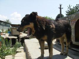 Foto 2 Butonata (geb. 2007)