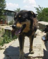 Foto 4 Butonata (geb. 2007)