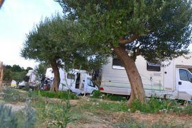 Foto 3 Campingplatz direkt am Meer in Rtina Miocici bei Zadar, Norddalmatien, Haustiere erlaubt